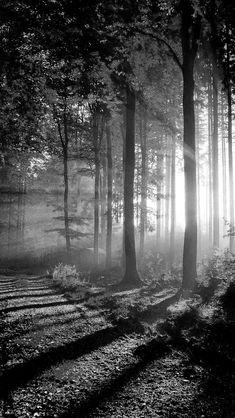41 Ideas For Tree Photography Landscape Walks Photography Reviews, Tree Photography, Landscape Photography, Photography Tips, Aerial Photography, Landscape Photos, Sky Landscape, Iphone Photography Apps, Digital Photography School