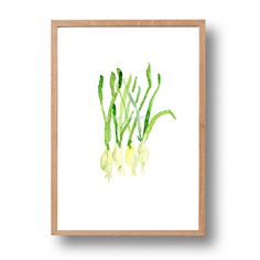 Spring Onions art print, kitchen art,  watercolor print, spring onions print,  botanical art, Restaurant art ,minimalist,   fresh green