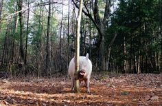 There's a pig hiding in this picture - Click the PIN to see more!