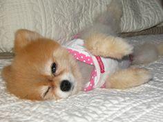cute little dog - Google 検索