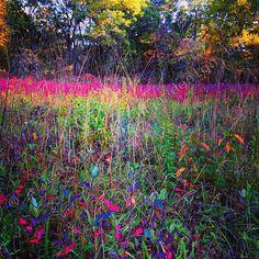 5x5 fuchsia fall season landscape nature por ASheaDesignLab en Etsy