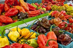 Chile Pepper Festival Sat, Sept 27.  You can't miss this Rachel.