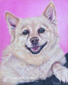 """DOG PORTRAIT Mica – Golden Schipperke Acrylic on Canvas, x x Private Commission, Hayley (Crestmead, QLD) Mica - Schipperke In Memory of Mica, a 13 year old golden/cream Schipperke. """"Mica was a rescue and was with me for 11 years. Schipperke Dog, 13 Year Olds, Dog Portraits, My Animal, Funny Animals, Corgi, Cream, Pets, Canvas"""