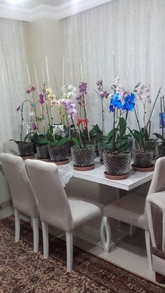 Orchid Care Reproduction Pot Change Recovery Blossoming How to do? - Orchid Care Reproduction Pot Change Recovery Blossoming How to do? Orchid Pot, Orchid Plants, Orchids Garden, Growing Orchids, Growing Plants, Indoor Flowers, Indoor Plants, Indoor Orchids, Brick Patterns Patio