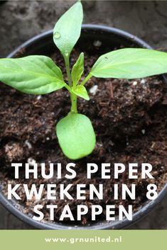 Growing pepper at home in 8 steps Herb Garden, Vegetable Garden, Garden Plants, Garden Tools, Container Gardening, Gardening Tips, Growing Peppers, Garden Care, Grow Your Own Food