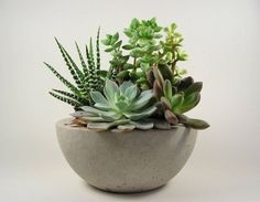 Scoutmob Shoppe - Concrete Bowl - Light succulent planter - could be fun in the middle of the table. Succulents In Containers, Cacti And Succulents, Planting Succulents, Planting Flowers, Succulent Planters, Diy Planters, Succulent Ideas, Growing Succulents, Outdoor Planters