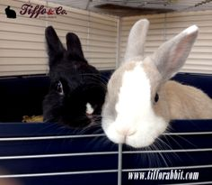Tiffo & Chany www.tifforabbit.com