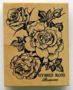 PSX Hybrid Rose Rosaceae Flower Rubber Stamp Never by catSCRAPPIN