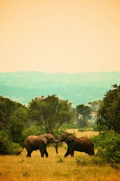 elephants - Discover Sojasun Italian Facebook, Pinterest and Instagram Pages!