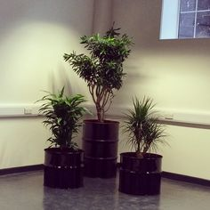 Reclaimed oil drums used as planters