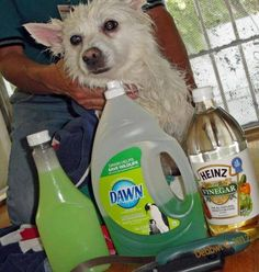 With summer here, FLEAS are definitely a problem. Instead of using harsh expensive chemicals try this safe HOME REMEDY!...  Just mix 1 cup Dish Soap, 1 cup white vinegar, and 1 quart warm water and applying to your pet. Let sit 5 minutes and the fleas should all wash away!  -OR- The Blue Dawn alone will rid the fleas ,  you don't even need the vinegar the Dawn will do the trick...