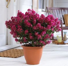For information on the types of shrubs that you should plant in garden containers, see this guide by Balcony Garden Web. Visit Southern Patio's website for great garden container ideas to plant. Garden Web, Garden Shrubs, Patio Plants, Garden Trees, Garden Design, Balcony Garden, Bush Garden, Sun Plants, Garden Spaces