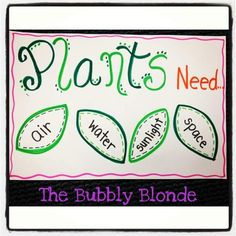 The Bubbly Blonde: Plants....flowers...life cycles....SPRING!