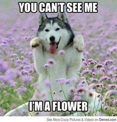 Dog-Lover-Meme-4