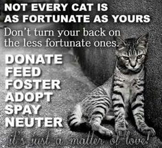 Donate, Feed, Foster, Adopt, Spay, Neuter.there are enough people who don't see the overwhelming evidence of the need to fix our animals. So there will always be a place to get your next animal.