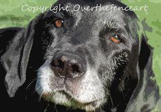LABRADOR Greeting Card  Photograph Black Labrador with Cocoa Brown Eyes Smiles for Camera