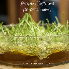 I love foraging and I love making cordials but since having children little of either has happened. My last attempt to make elderflower cordial was with a year old Euan and it took all of his nap time just to prepare everything. Elderflower Cordial, Thing 1, Allotment, Seaweed Salad, Recipe Using, Bud, Parenting, Posts, Park