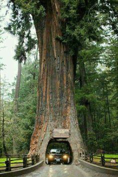 Save trees