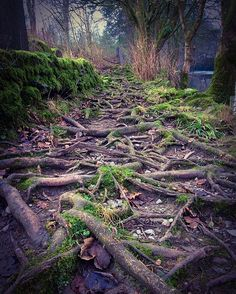 Roots #treeroots #ambleside #dogwalk #cumbria #lakedistrict #beautifultrees Tree Roots, Tree Sculpture, Cumbria, Lake District, Dog Walking, The Fosters, Hiking, Trees, Instagram Posts