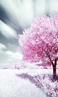 Tree Magnificient