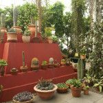 An enthralling exhibition at the New York Botanical Garden explores Mexican artist Frida Kahlo's passion for the flora and fauna of her native country through a selection of her artwork and a stunning recreation of the garden she cultivated at her Mexico City home, Casa Azul.