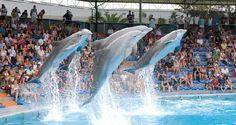 O Parque Temático ZOOMARINE reabriu para a temporada 2015!   Algarlife