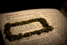 Cannabis is an herb to be received with thanks to God. 1 Timothy 4:4