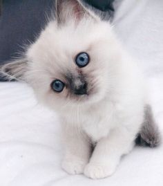 Adorable Baby Kitten