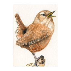 House Wren ACEO Mini Art Print of Bird Watercolor Painting. $3.95, via Etsy.