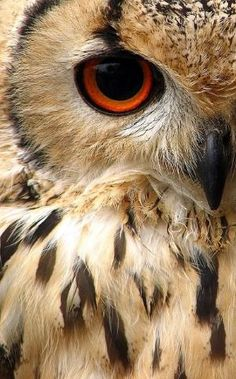 Indian Eagle Owl by maria.t.rogers