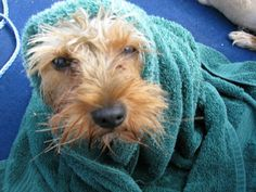 There are at least 19 great things you can do with your old towels, including donating them to a pet shelter.