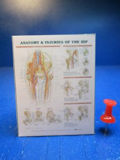 Miniature Injuries of a Hip Sign P951 Dollhouse