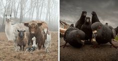 10  Animals That Look Like They're About To Drop The Hottest Albums Of The Year