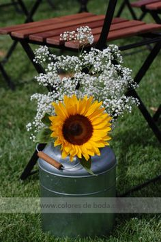 Milk Jugs as vases with sunflowers and baby's breath Lecheras con girasoles y paniculata