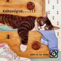 Image Chat, Gatos Cats, All About Cats, Cat Sleeping, Cat Drawing, Crazy Cats, Cat Art, Cats And Kittens, Cute Cats