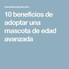 10 beneficios de adoptar una mascota de edad avanzada