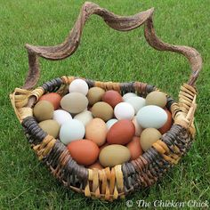 All about eggs, blue, brown, funky, rubbery, no shell, blood spots, fertile, and more!
