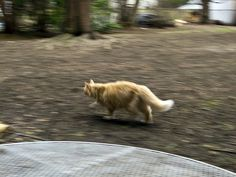Murray on the Prowl by Boneil Photography, via Flickr