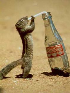 thirsty squirrel... to add to the collection :)