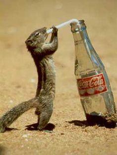thirsty squirrel...