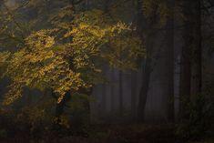"""""""Those Dark Autumn Days"""" by Heiko Gerlicher."""