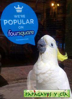 Foursquare, Parrot, Bird, Animals, Parrots, Tent, Pets, Animais, Parrot Bird