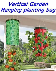 Several benefits lie in growing tomato plants upside down. Marvelous Benefits of Growing Tomatoes Upside Down Ideas. Growing Tomatoes Indoors, Growing Tomato Plants, Growing Tomatoes In Containers, Growing Vegetables, Grow Tomatoes, Hanging Planters Outdoor, Outdoor Plants, Garden Planters, Hanging Gardens