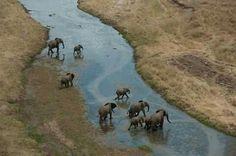 Elephants crossing the river In Tanzania
