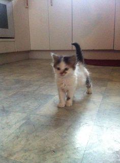 Kitten Hanzell SO CUTE. when he first arrived!!