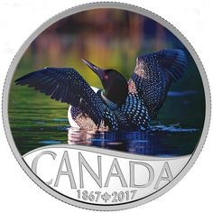 2017 $10 Fine Silver Coin - Celebrating Canada's 150th: Common Loon Canadian Nature, Canadian Coins, Canada 150, Old Coins, Money Matters, Coin Collecting, Silver Coins, Postage Stamps, Vibrant Colors