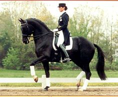 Dressage...this is a great example of the piaffe..note the lowering of the hindquarters and the activity of the right hind leg...