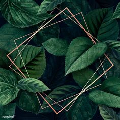 Rhombus frame on a leafy background vector premium image by eyeeyeview Framed Wallpaper, Screen Wallpaper, Wallpaper Backgrounds, Tropical Background, Plant Background, Natural Background, Best Nature Wallpapers, Cute Wallpapers, Up Imagenes