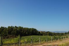 One of our certified #organic #DOCG #vineyards in #Tuscany #In