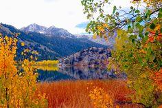 CALIFORNIA: Fall Color